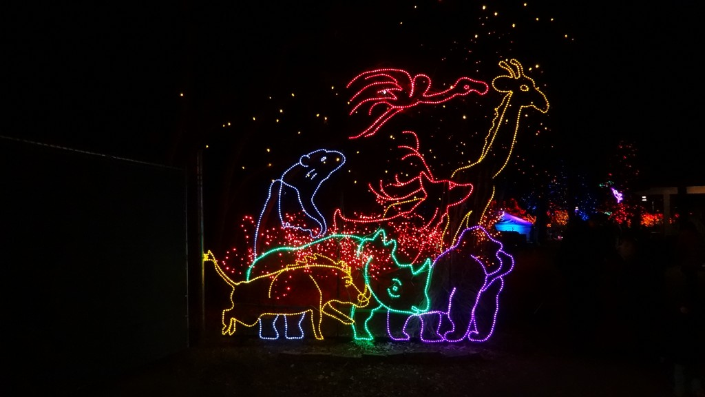 zoo lights 2013 picture